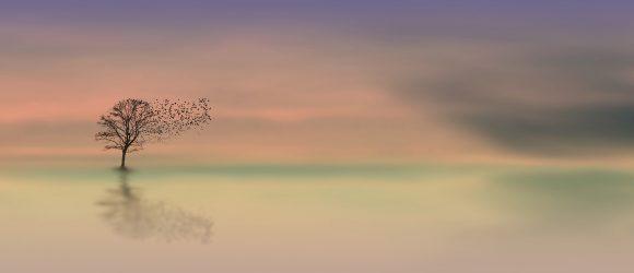 Strom a ptáci