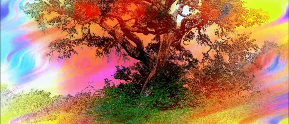 Strom plný barev
