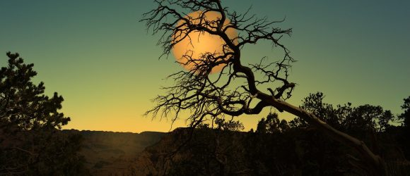 Osamělý strom a oranžové slunce