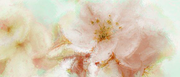 V květinové zahradě / léto 2008