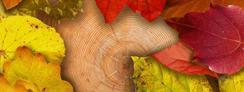 dřevo, stromy