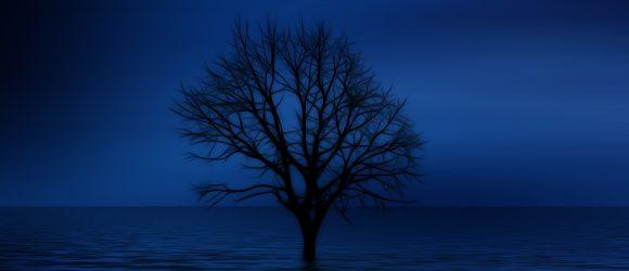 Osamocený strom