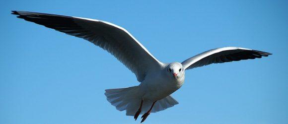Pták vznášející se po modré obloze