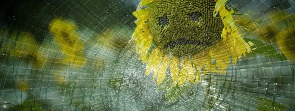 Smutná slunečnice