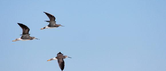 Tři ptáci letí oblohou